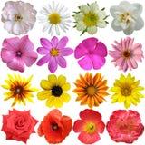 λουλούδια που τίθεντα&iot Στοκ φωτογραφίες με δικαίωμα ελεύθερης χρήσης
