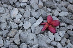 λουλούδια σε ένα κόκκινο χαλίκι γκρίζο Στοκ φωτογραφίες με δικαίωμα ελεύθερης χρήσης