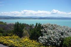 λουλούδια στη παράλια Ειρηνικού στοκ φωτογραφία με δικαίωμα ελεύθερης χρήσης