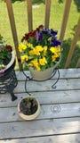 λουλούδια συμπαθητικά Στοκ Φωτογραφία