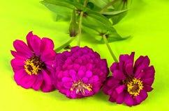λουλούδια τρία Στοκ φωτογραφίες με δικαίωμα ελεύθερης χρήσης