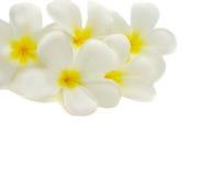 λουλούδια τροπικά Στοκ Εικόνα