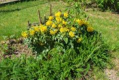 λουλούδια φρέσκα Στοκ εικόνα με δικαίωμα ελεύθερης χρήσης