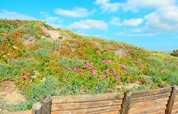 λουλούδια φραγών Στοκ Εικόνες