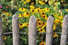 λουλούδια φραγών Στοκ εικόνες με δικαίωμα ελεύθερης χρήσης