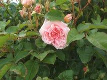 λουλούδια φύσης στοκ φωτογραφία με δικαίωμα ελεύθερης χρήσης