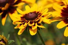 λουλούδια χρυσά Στοκ εικόνα με δικαίωμα ελεύθερης χρήσης
