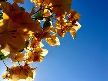 λουλούδια χρυσά Στοκ Εικόνα
