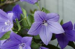 12 λουλούδια Στοκ Φωτογραφίες
