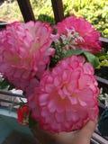 λουλούδι αγάπης; Στοκ Εικόνες