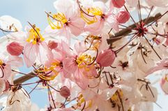 λουλούδι ανασκόπησης φ&ups Καταπληκτική άποψη φύσης της άνθισης λουλουδιών Στοκ φωτογραφίες με δικαίωμα ελεύθερης χρήσης