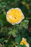 λουλούδι ανασκόπησης φ&ups Καταπληκτική άποψη φύσης της άνθισης λουλουδιών Στοκ φωτογραφία με δικαίωμα ελεύθερης χρήσης