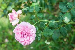 λουλούδι ανασκόπησης φ&ups Καταπληκτική άποψη φύσης της άνθισης λουλουδιών Στοκ εικόνες με δικαίωμα ελεύθερης χρήσης