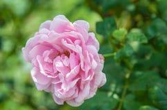 λουλούδι ανασκόπησης φ&ups Καταπληκτική άποψη φύσης της άνθισης λουλουδιών Στοκ Φωτογραφίες