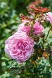 λουλούδι ανασκόπησης φ&ups Καταπληκτική άποψη φύσης της άνθισης λουλουδιών Στοκ Εικόνες