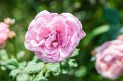 λουλούδι ανασκόπησης φ&ups Καταπληκτική άποψη φύσης της άνθισης λουλουδιών Στοκ Φωτογραφία