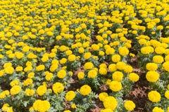 λουλούδι ανασκόπησης φ&ups Καταπληκτική άποψη φύσης των κόκκινων λουλουδιών Στοκ Εικόνα