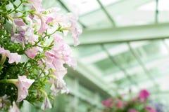 λουλούδι ανασκόπησης φ&ups Στοκ Εικόνες