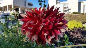 λουλούδι αρκετά Στοκ εικόνες με δικαίωμα ελεύθερης χρήσης