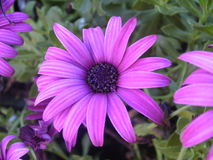 λουλούδι αρκετά Στοκ φωτογραφίες με δικαίωμα ελεύθερης χρήσης