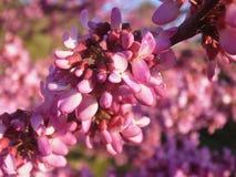 λουλούδι αρκετά Στοκ Φωτογραφία