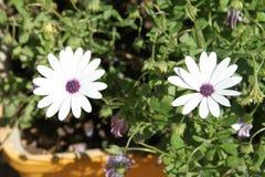 λουλούδι αρκετά Στοκ Εικόνες