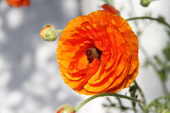 λουλούδι αρκετά Στοκ φωτογραφία με δικαίωμα ελεύθερης χρήσης