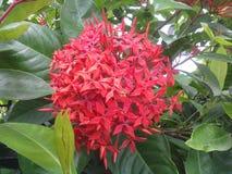 λουλούδι δεσμών Στοκ Εικόνες
