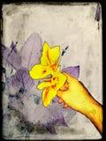 λουλούδι θαυμάσιο Στοκ φωτογραφία με δικαίωμα ελεύθερης χρήσης