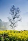λουλούδι και δέντρο βιασμών Στοκ Φωτογραφία