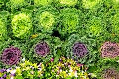 λουλούδι και λαχανικό Στοκ φωτογραφίες με δικαίωμα ελεύθερης χρήσης