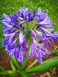 λουλούδι καλό Στοκ εικόνα με δικαίωμα ελεύθερης χρήσης