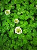 λουλούδι καλό Στοκ Φωτογραφίες