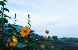 λουλούδι κόσμου κίτριν&omicr Στοκ εικόνες με δικαίωμα ελεύθερης χρήσης