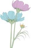 λουλούδι κόσμου που απ Στοκ Φωτογραφία