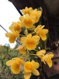 λουλούδι κλίματος που αναπτύσσει orchid τροπικό κίτρινο στοκ φωτογραφία με δικαίωμα ελεύθερης χρήσης