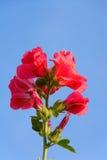 λουλούδι με τον ουρανό Στοκ Φωτογραφία