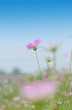 λουλούδι πανέμορφο Στοκ Εικόνα