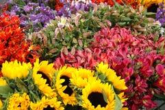 1 λουλούδι ρύθμισης Στοκ Φωτογραφίες