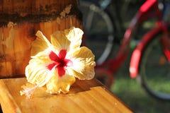 λουλούδι τροπικό Στοκ Εικόνα