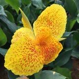λουλούδι τροπικό στοκ φωτογραφία