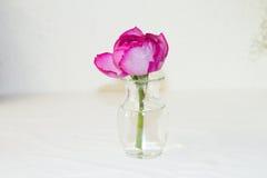 λουλούδι τροπικό Στοκ φωτογραφία με δικαίωμα ελεύθερης χρήσης