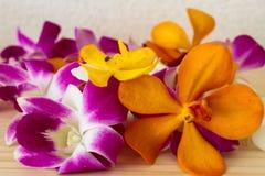 λουλούδι τροπικό Στοκ εικόνες με δικαίωμα ελεύθερης χρήσης