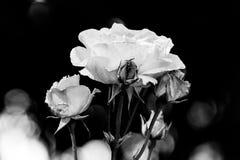 λουλούδι 5 στοκ εικόνες