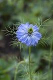 1 λουλούδι στοκ εικόνες