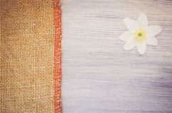 λουλούδι nemorosa anemone σε ένα βαμμένα κρητιδογραφία ξύλο και burlap backg Στοκ φωτογραφία με δικαίωμα ελεύθερης χρήσης