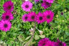 Οφθαλμοί, λουλούδια και άνοιξη Στοκ Φωτογραφίες