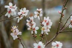 Οφθαλμοί, λουλούδια και άνοιξη Στοκ εικόνες με δικαίωμα ελεύθερης χρήσης