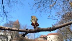 Οφθαλμός σε ένα δέντρο o στοκ εικόνα με δικαίωμα ελεύθερης χρήσης