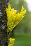 Οφθαλμοί άνοιξη στον κορμό δέντρων Στοκ Εικόνες